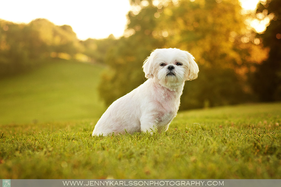 Jazzi Dog Photography in Frick Park Pittsburgh 6