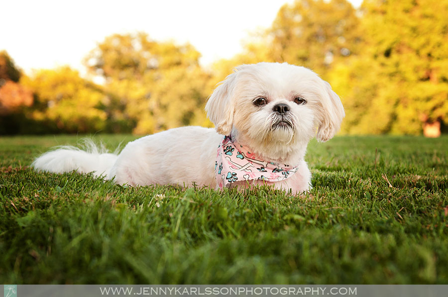 Jazzi Dog Photography in Frick Park Pittsburgh 2