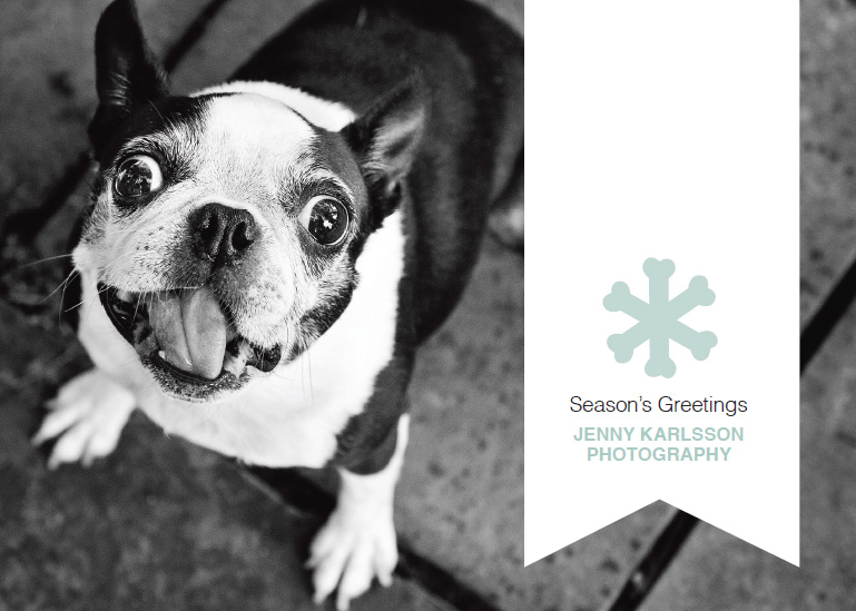 Holiday Promotion for Jenny Karlsson Photography at Petagogy