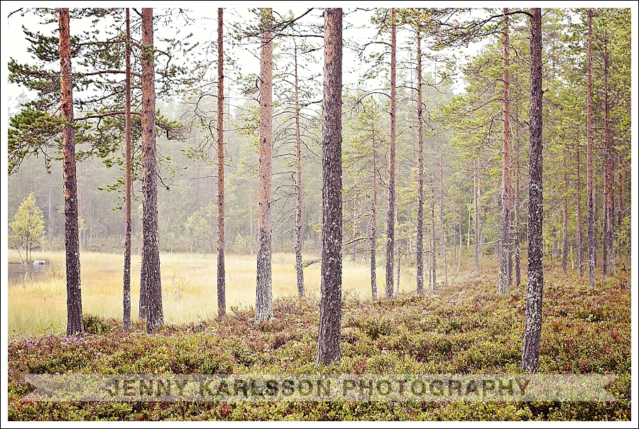 Swedish Nature Photography