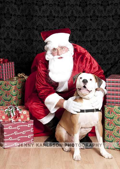 Pet Photos with Santa at Petagogy