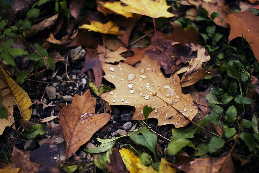 Jenny Karlsson Photography | Still Life Collection Leaf