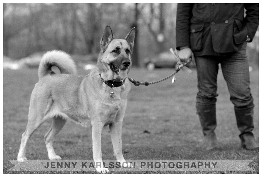 Pet Photography Pittsburgh Schenley Park