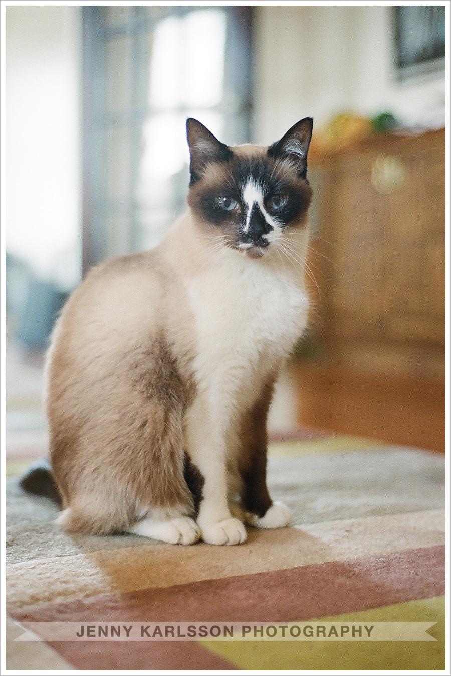 Cat - Pittsburgh Film Portrait Photographer 003