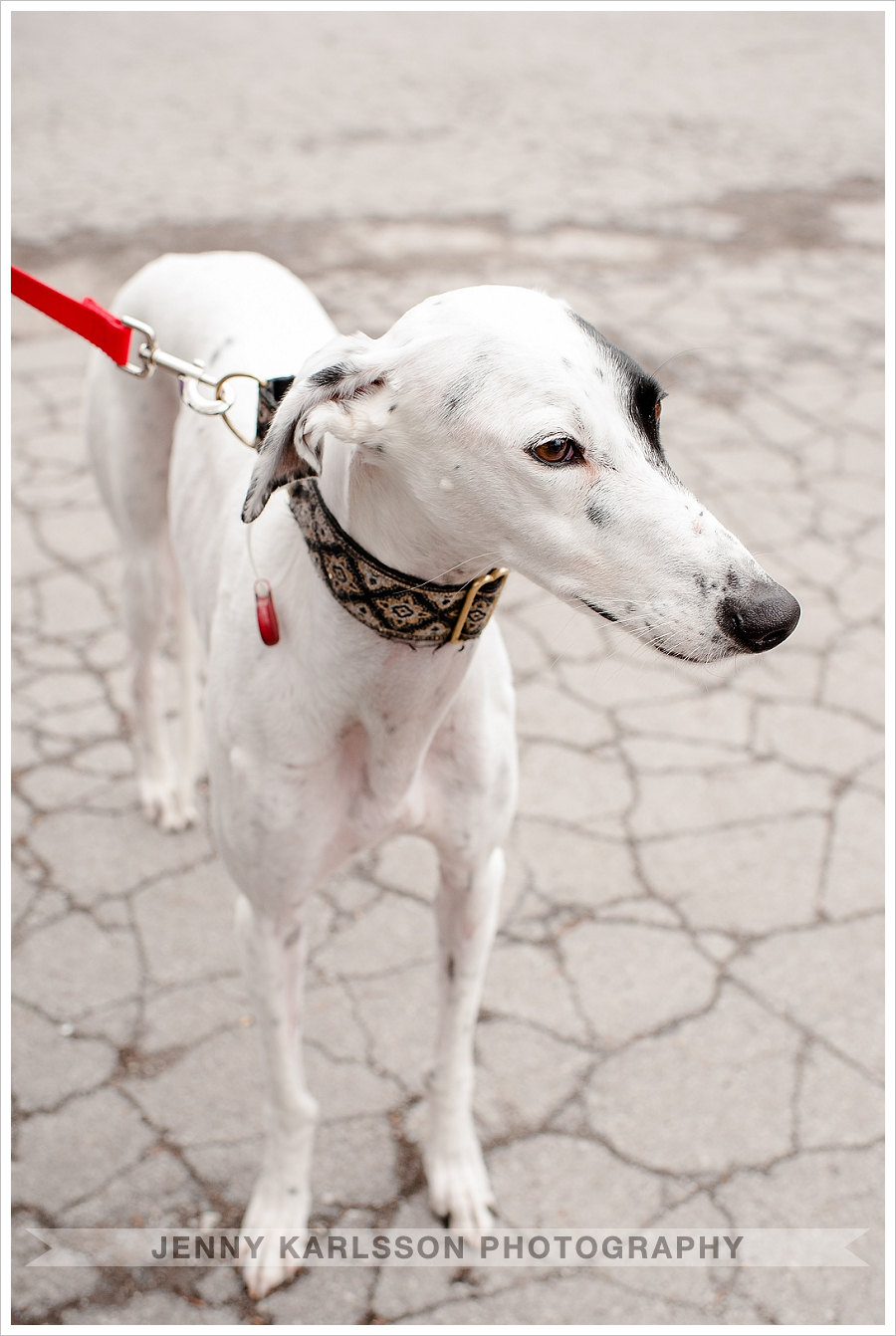 Greyhound Rescue Pittsburgh
