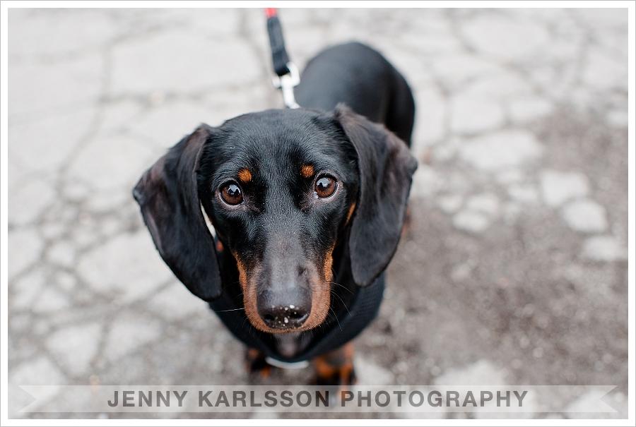 dachshund pittsburgh