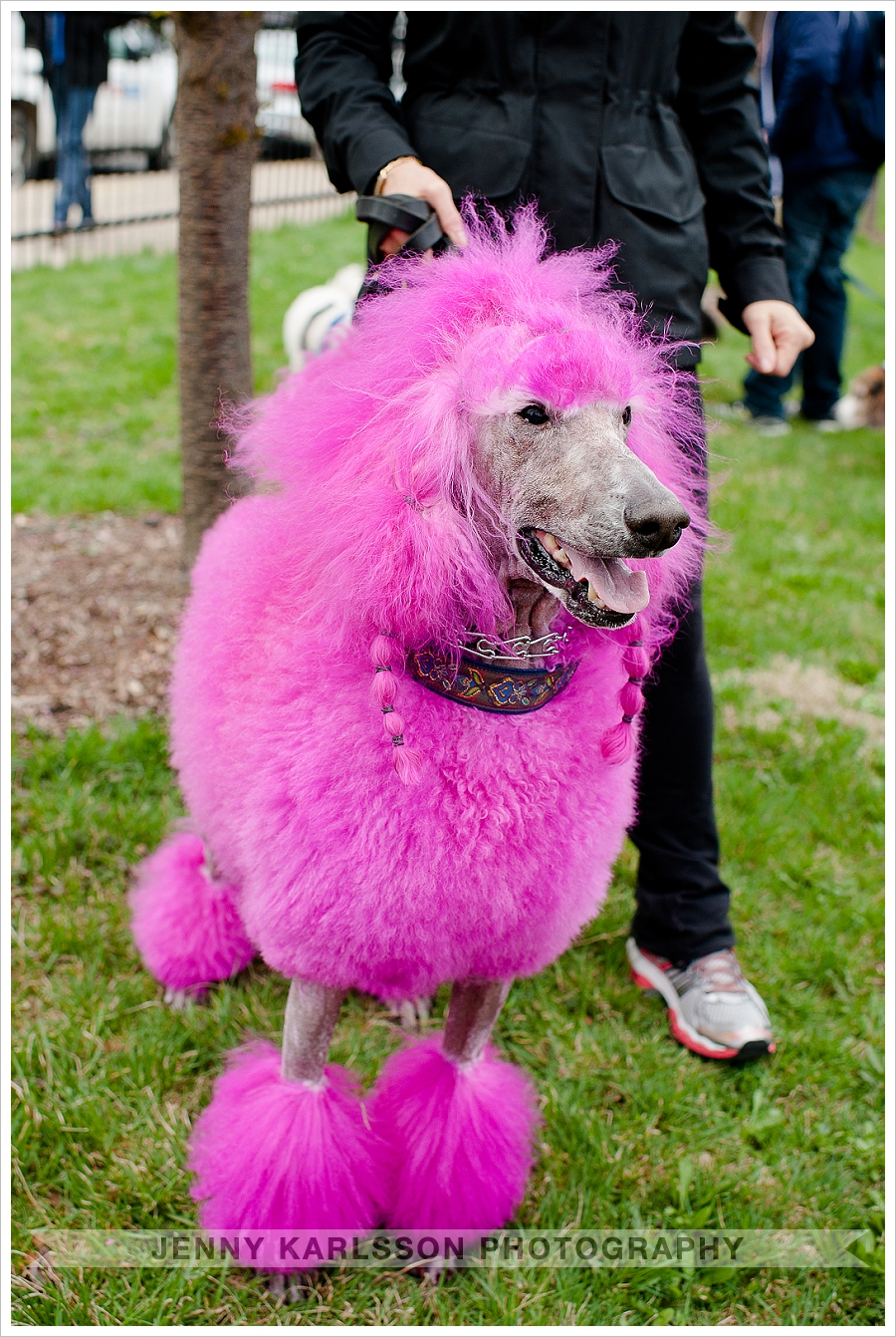 Pink Poodle Pittsburgh