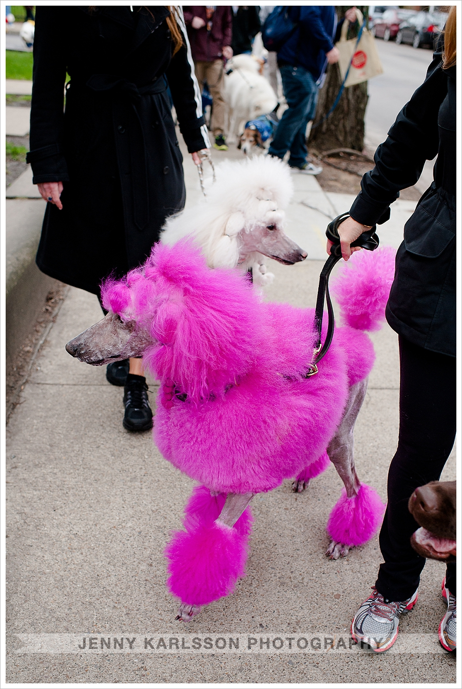 Pink Poodle Model Pittsburgh
