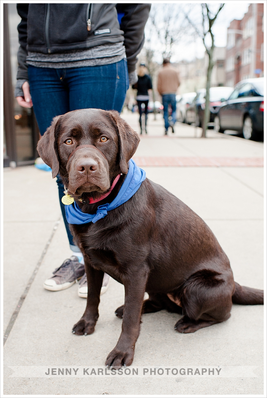 Labrador Retriever Dog Photography Pittsburgh