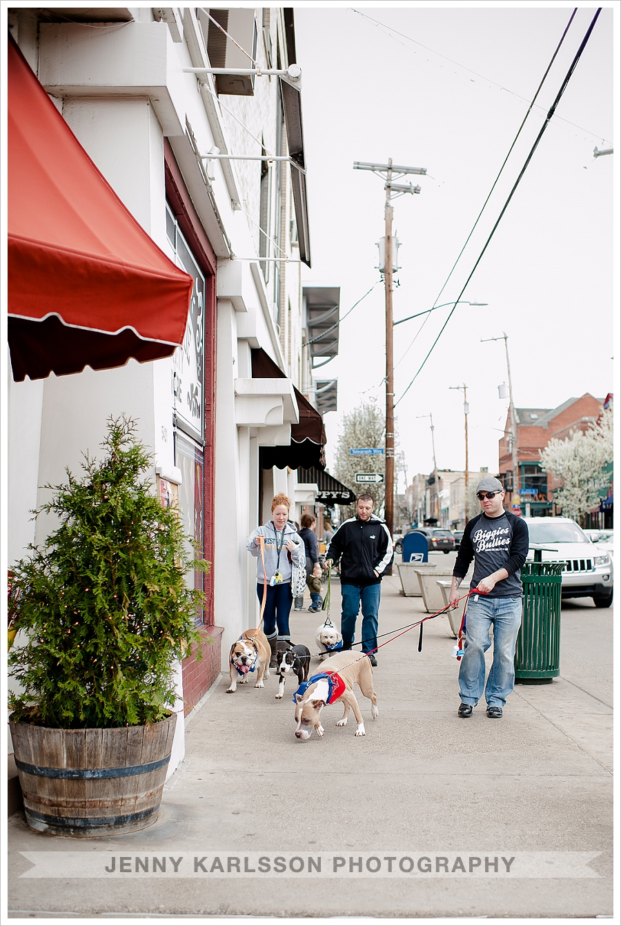 Dogs walking on Walnut Street Shadyside