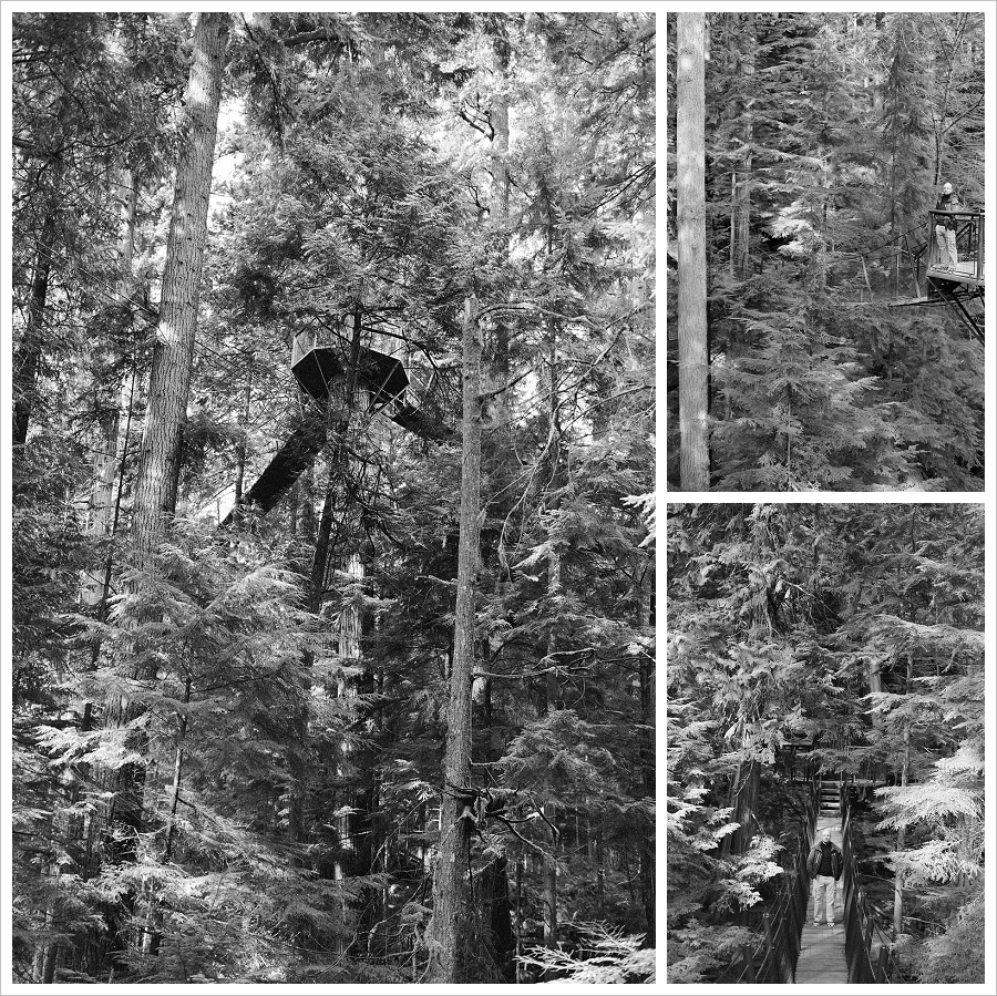 Capilano Tree Walk
