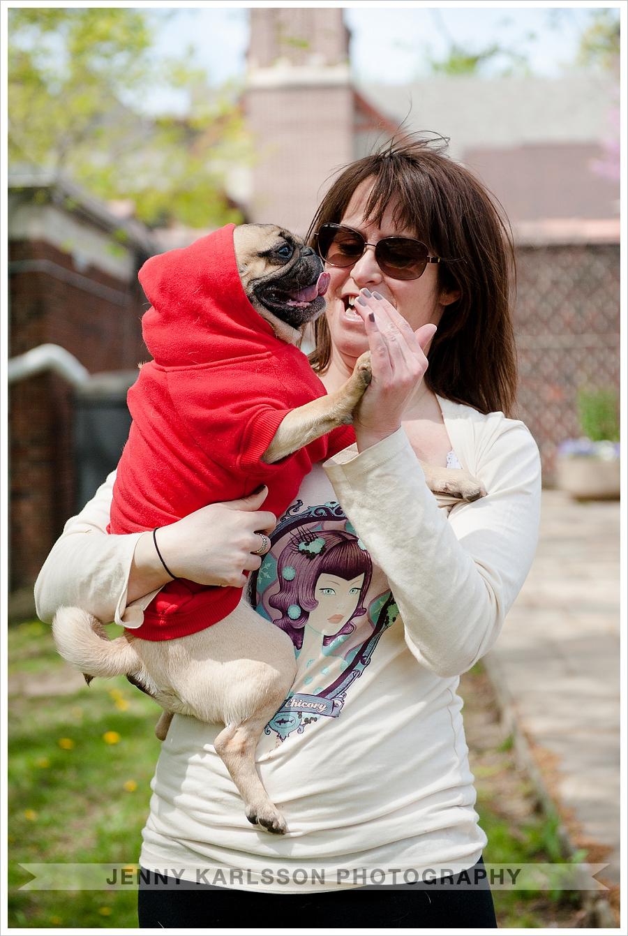 Pug giving high five - Pittsburgh dog photographer