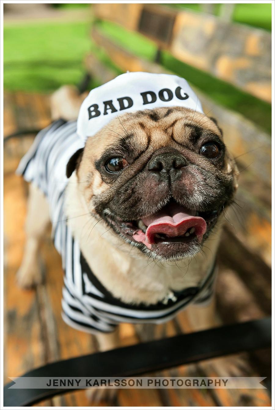 Jack - Bad Dog Pittsburgh Pet Photographer