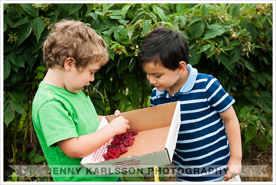 raspberry picking with friends