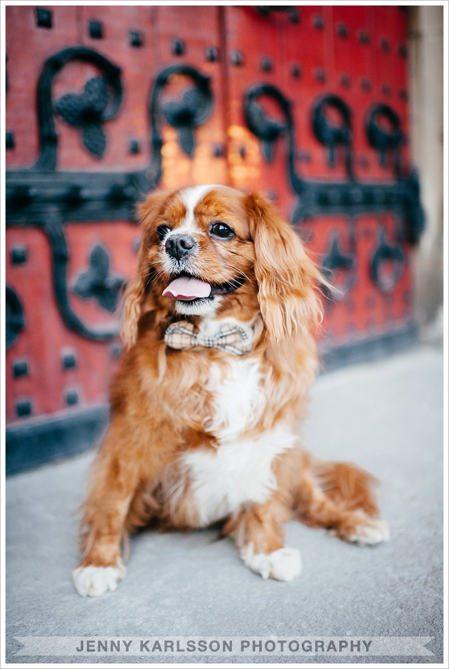 Pittsburgh Pet Photographer