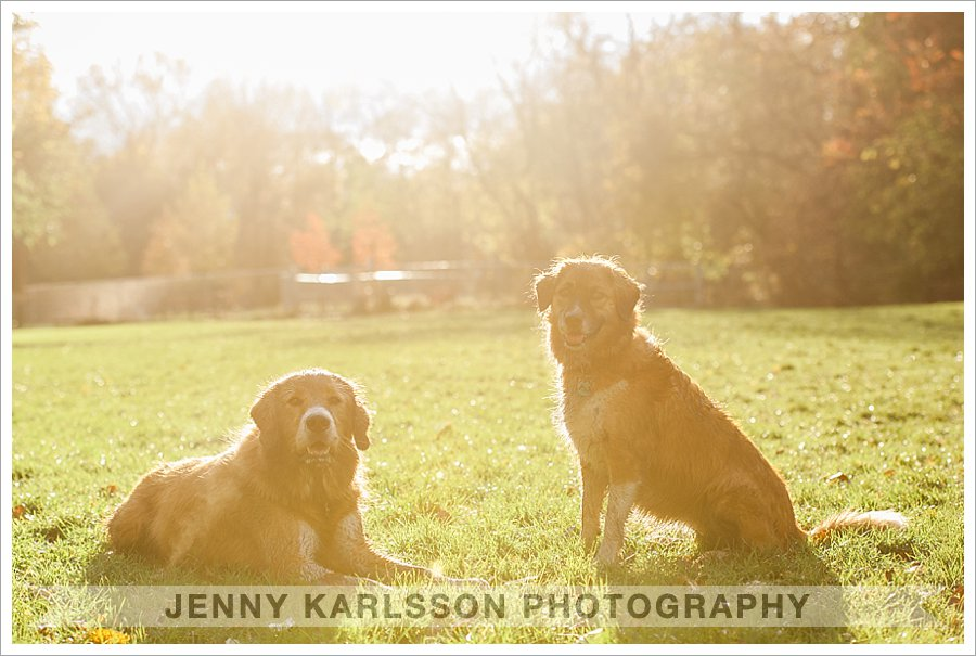 pittsburgh pet photography
