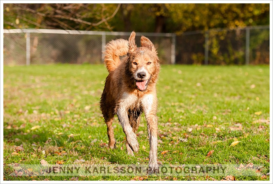 frick park pet portraits