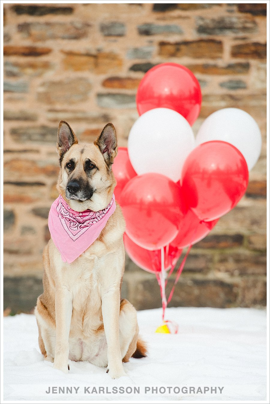 Valentines Day Dog Mini Sessions