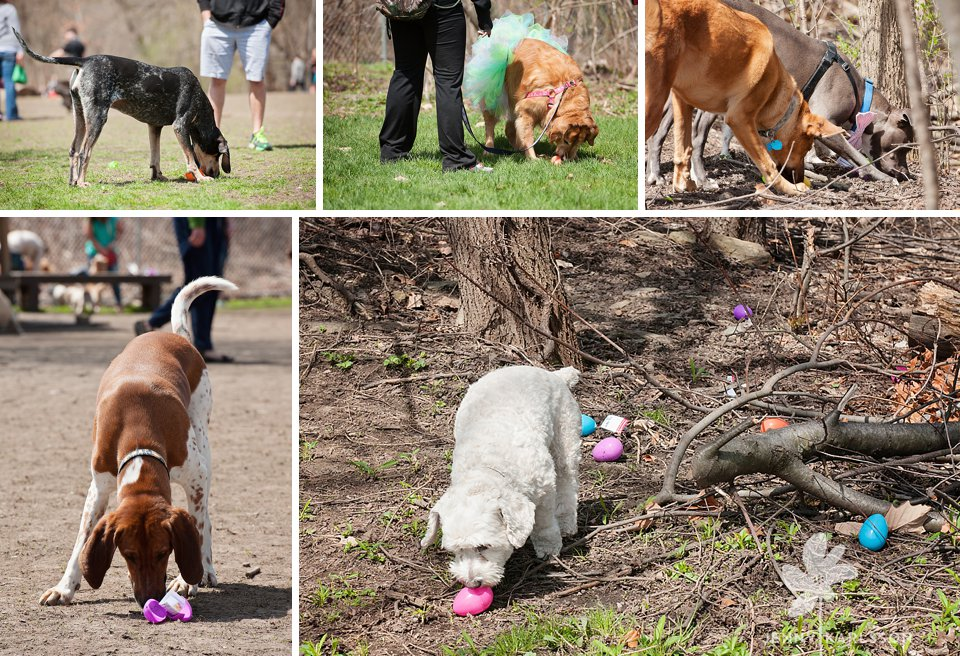 camp bow wow egg hunt082