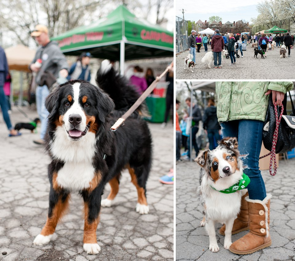 bark shadyside pup walk