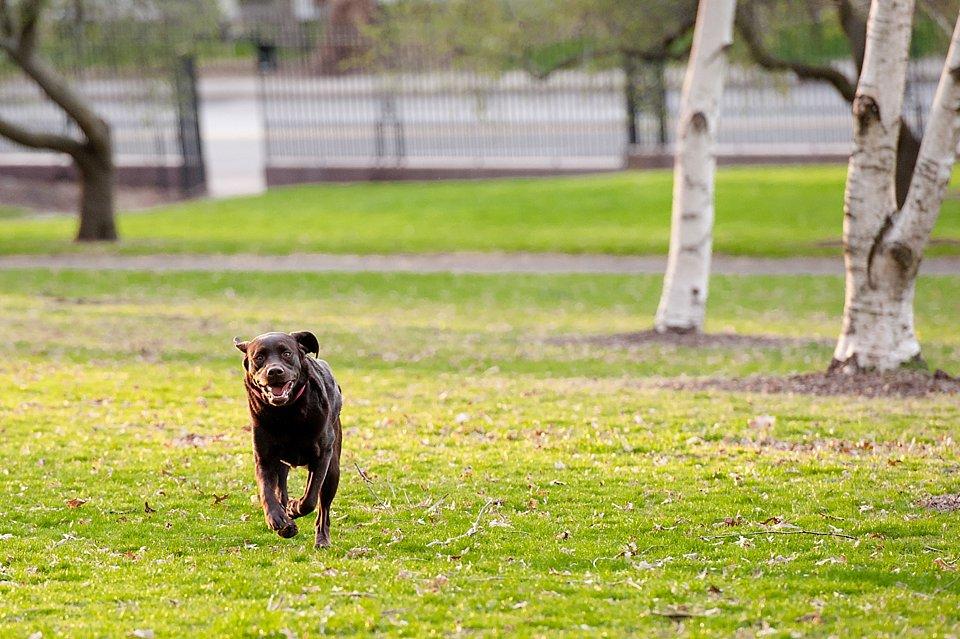 dog running in mellon park