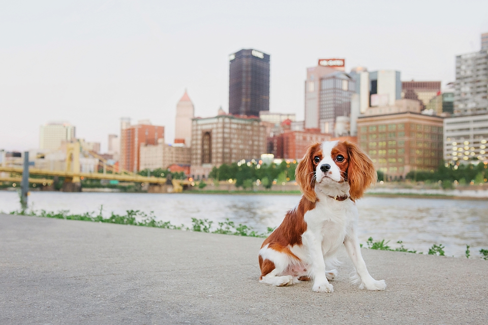 dog photography in Pittsburgh