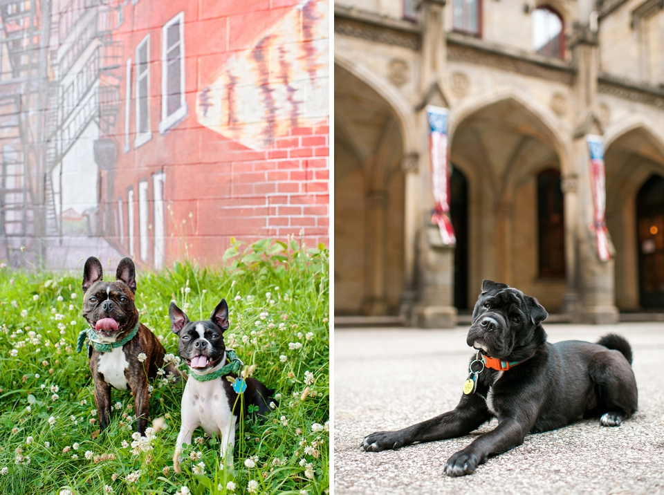 Best Pittsburgh Pet Photographers 015