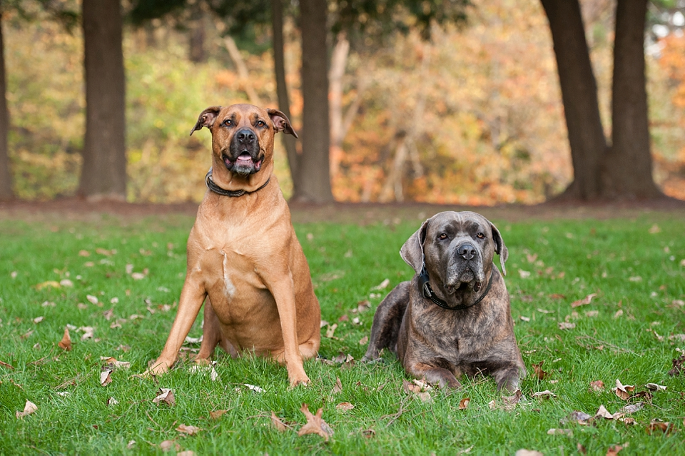 Best Pittsburgh Pet Photographers 056