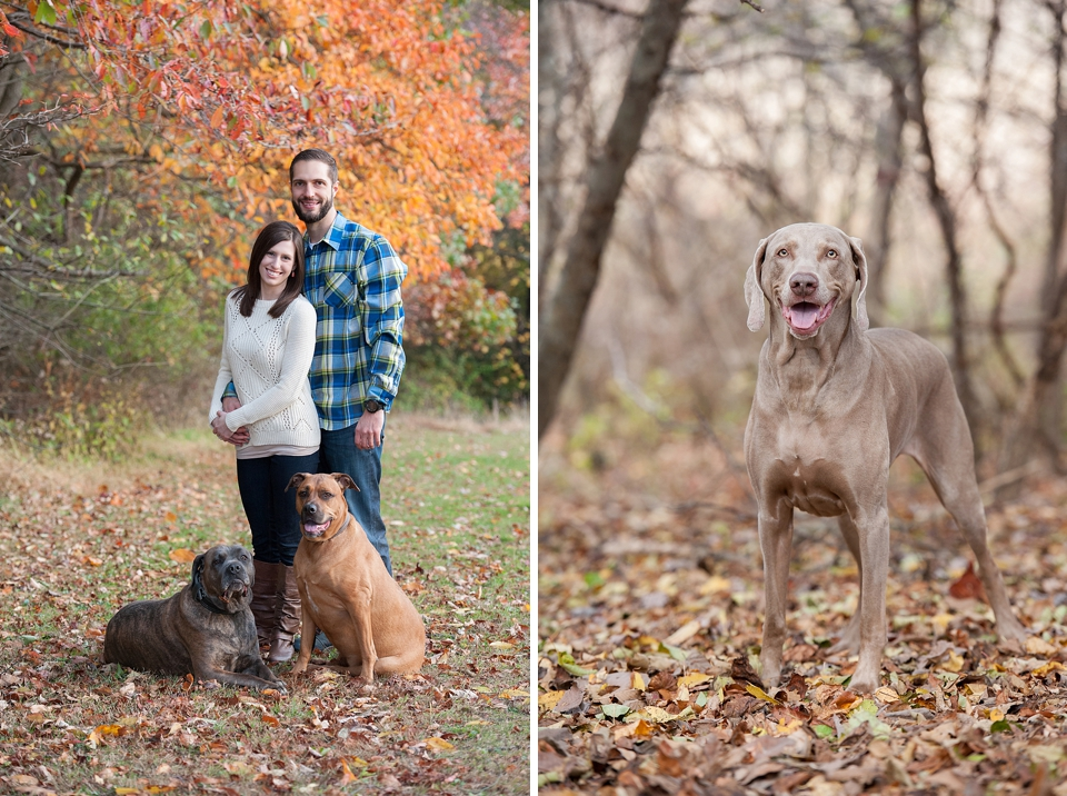 Best Pittsburgh Pet Photographers 063