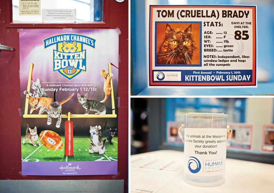 Kitten Bowl WPHS 001