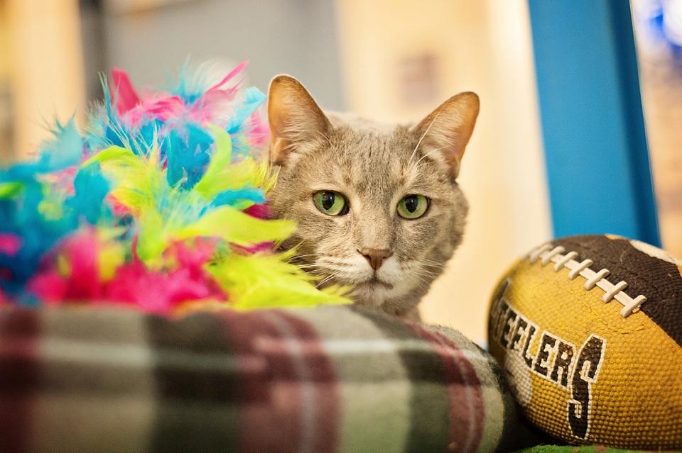 Kitten Bowl WPHS 036