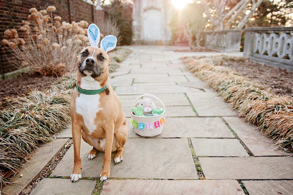 easter bunny dog pictures