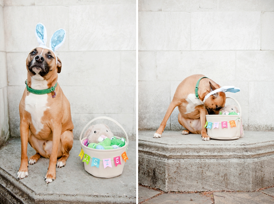 easter bunny dog pittsburgh