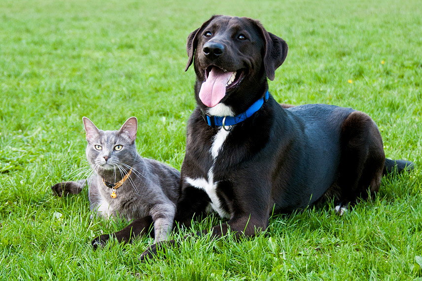 outdoor-cat-dog-photo