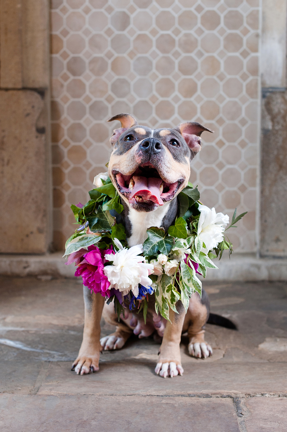 Adoptable dog in flower crown