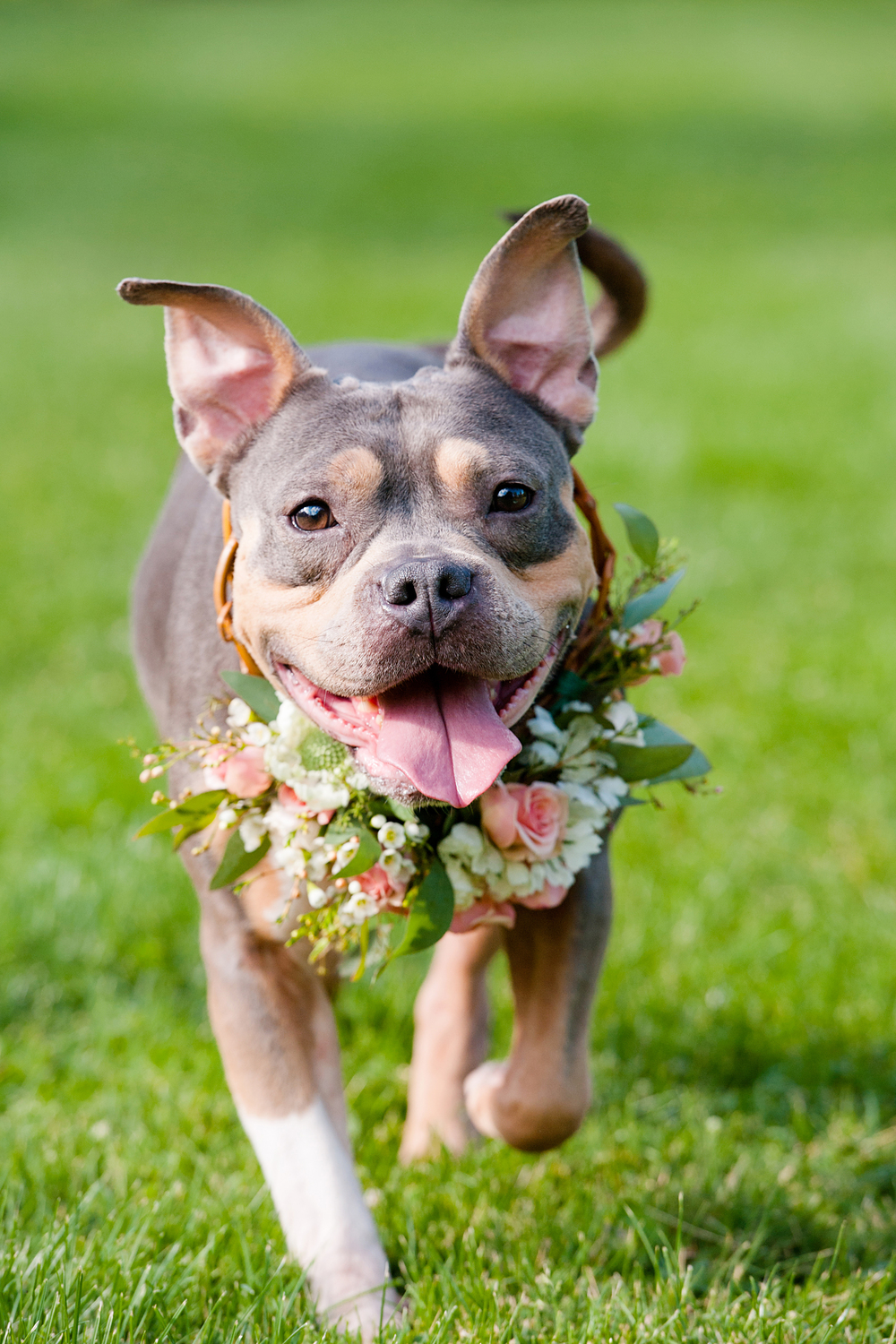 pit-bull-flower-crowns-04