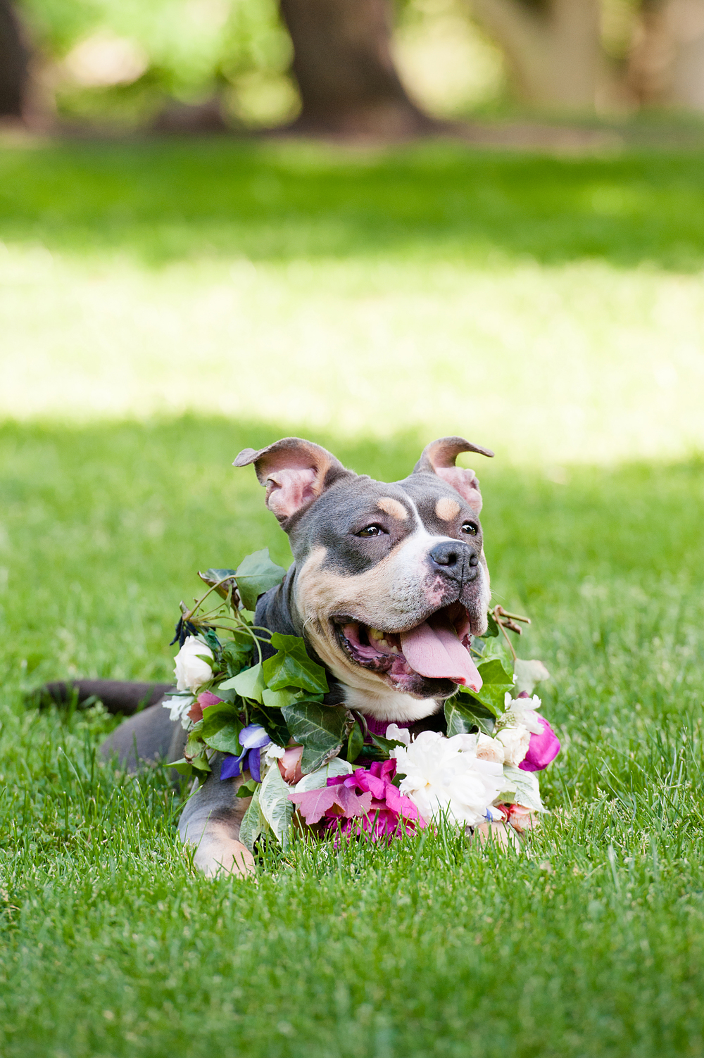 Dog in floral crown