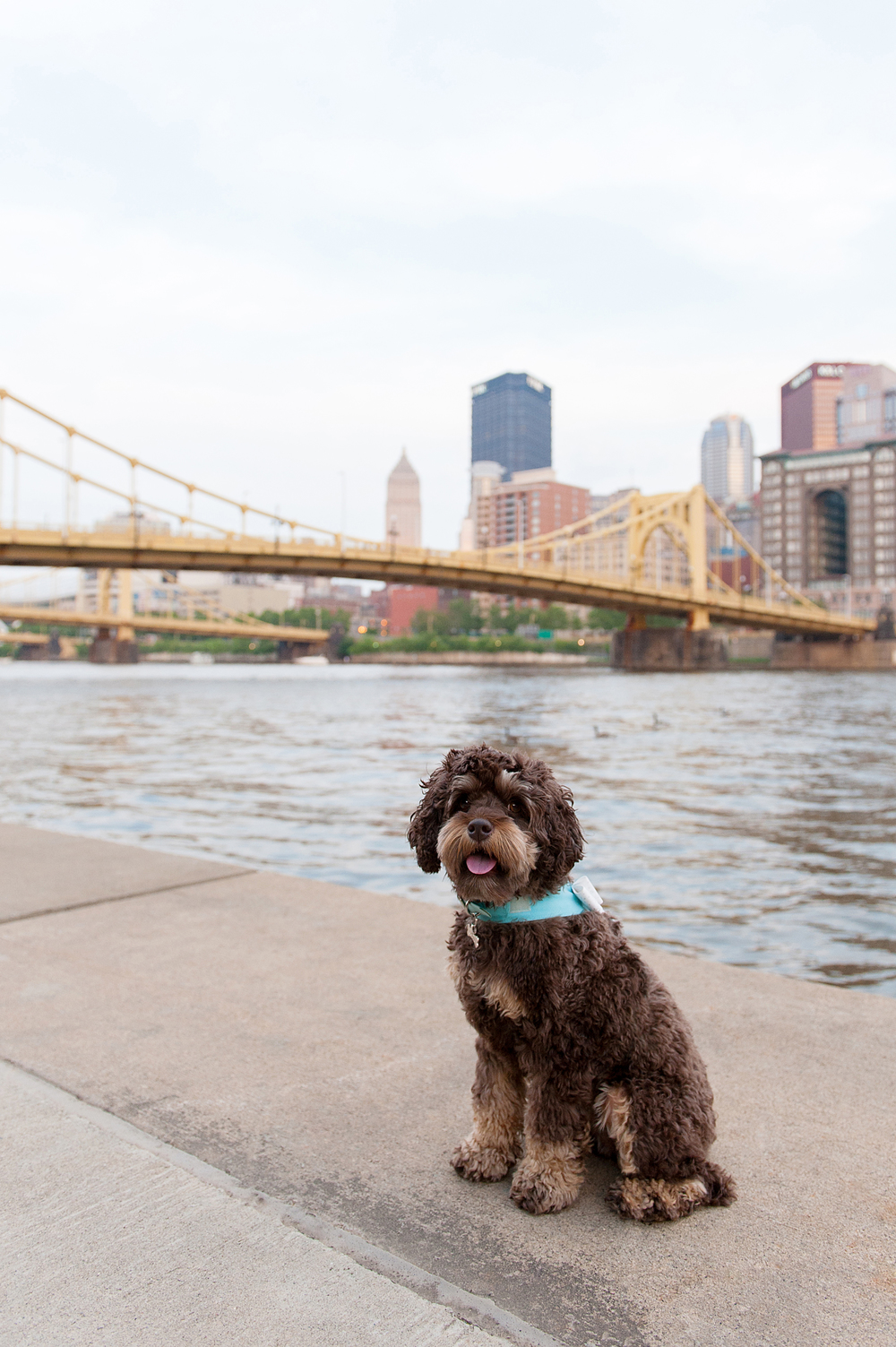 pittsburgh-pet-photographer-sadie-04.jpg