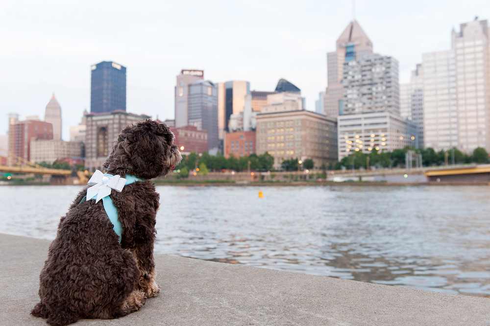 pittsburgh-pet-photographer-sadie-05.jpg