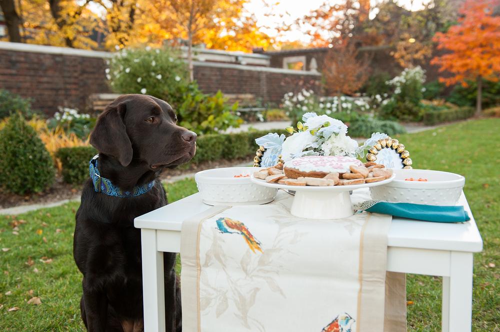 dog-birthday-party-jenny-karlsson-013.jpg