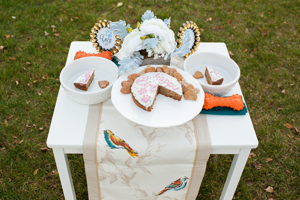 dog-birthday-party-jenny-karlsson-022.jpg