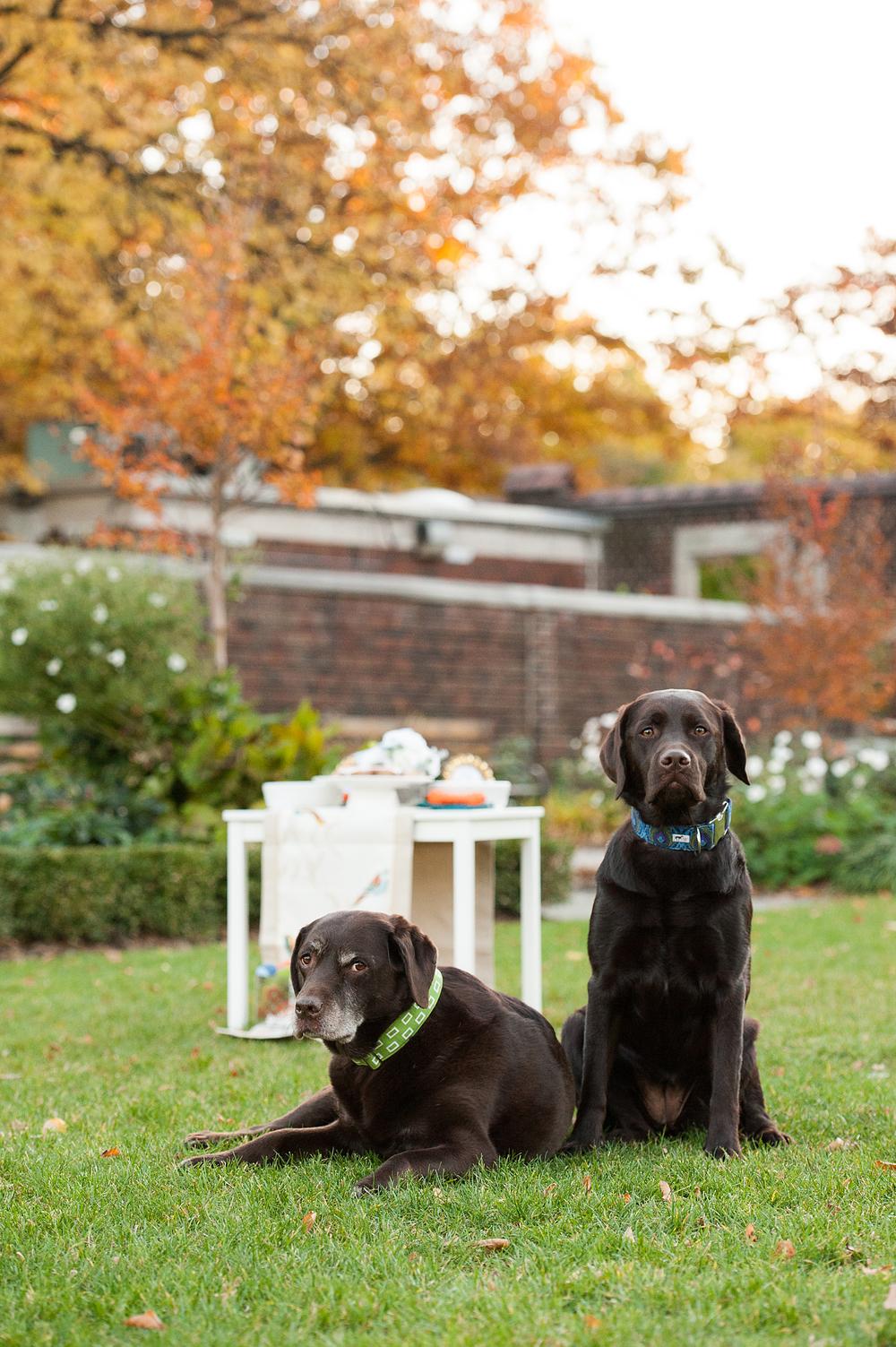 dog-birthday-party-jenny-karlsson-026.jpg