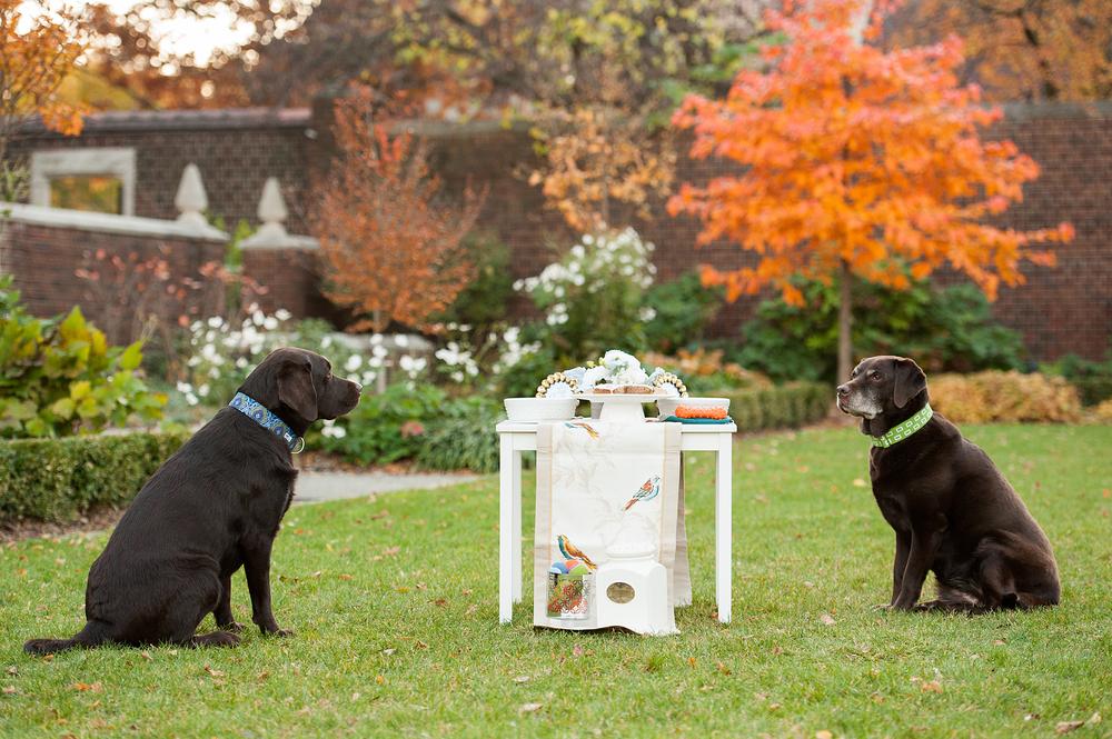 dog-birthday-party-jenny-karlsson-027.jpg