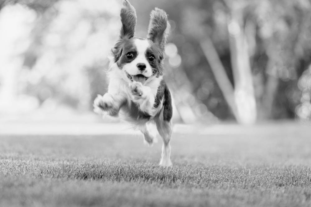 Leap Day Dog Photography Jenny Karlsson 001.jpg