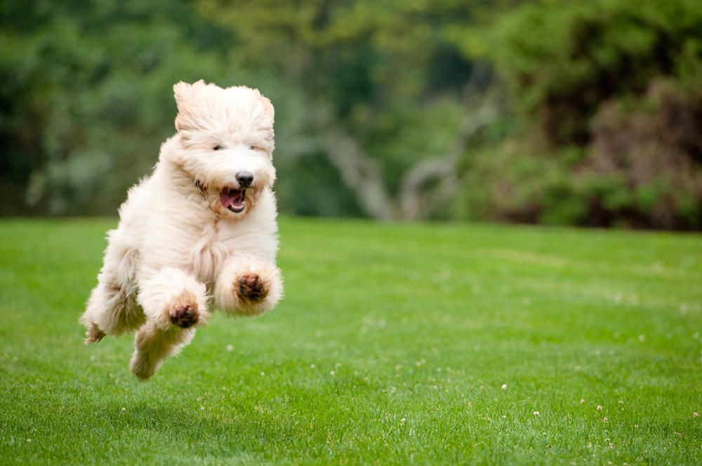 Leap Day Dog Photography Jenny Karlsson 002.jpg