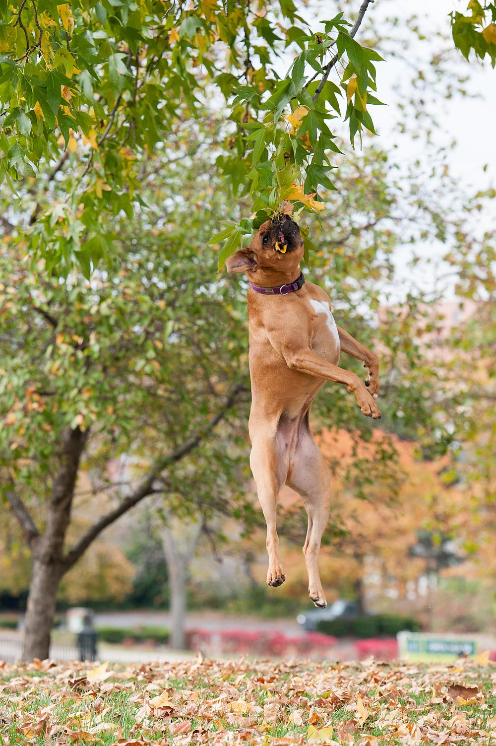 Leap Day Dog Photography Jenny Karlsson 009.jpg