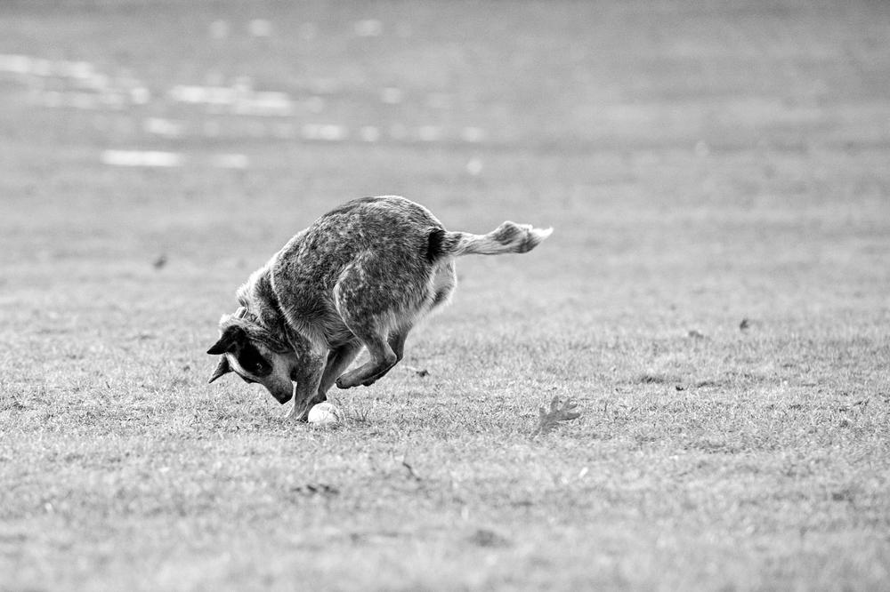 Leap Day Dog Photography Jenny Karlsson 012.jpg