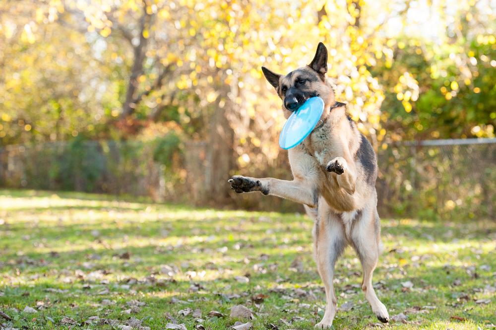 Leap Day Dog Photography Jenny Karlsson 010.jpg