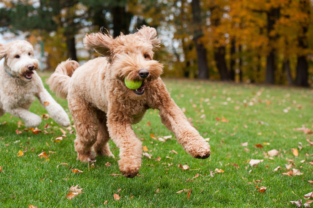 Leap Day Dog Photography Jenny Karlsson 017.jpg