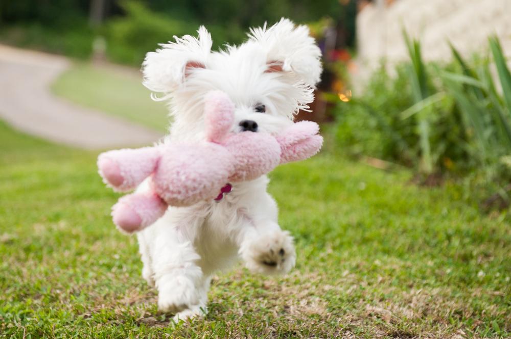 Leap Day Dog Photography Jenny Karlsson 018.jpg